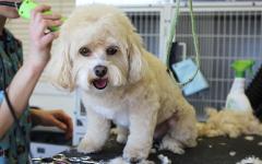 Flemington Petsmart Deaths