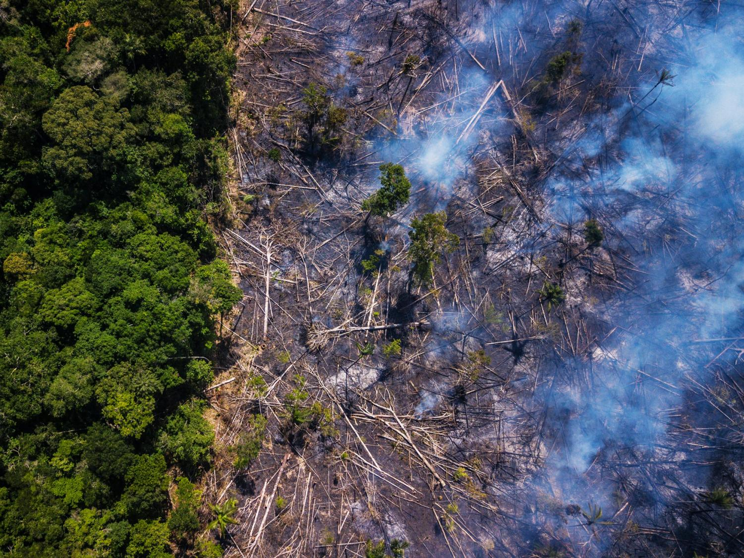A spike in the  deforestation rate is the leading cause of this year's increase in Amazon fires.  Dado Galdieri / Getty Images