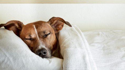The Effect of Sleep on Students