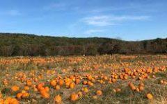 Ort Farms pumpkin patch (Ort Farms)